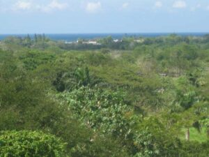 Land for Sale in Negril lot 100 gated community real estate westmoreland jamaica selling by owner