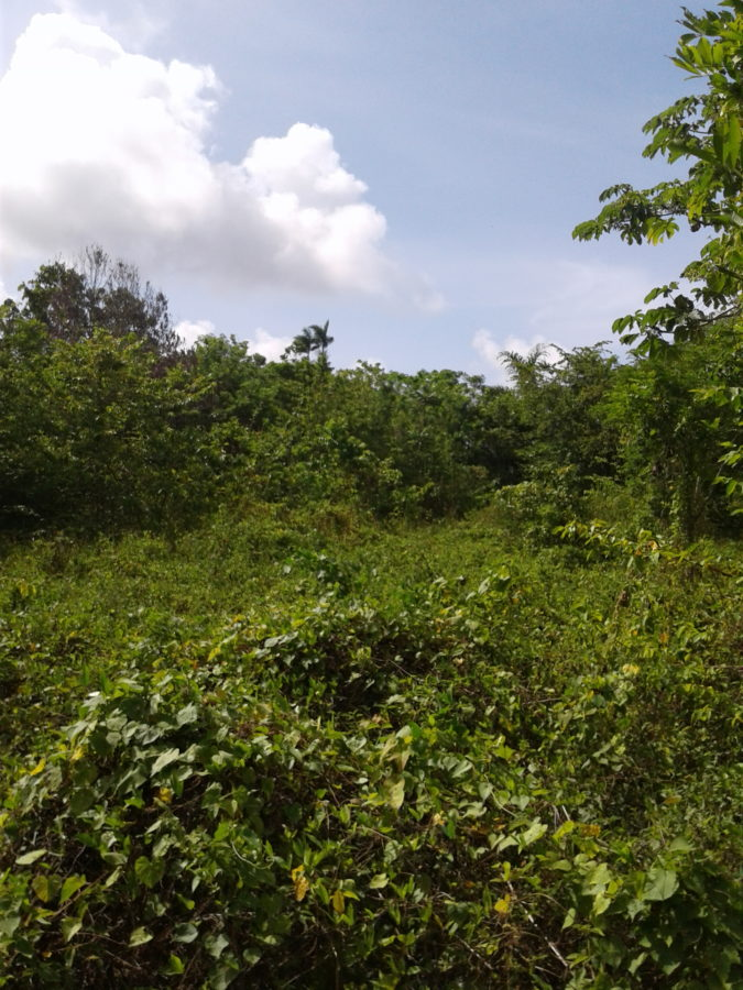 Farm Land for Sale Hector's River Portland